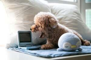 cute dog who had been blogging for business growth