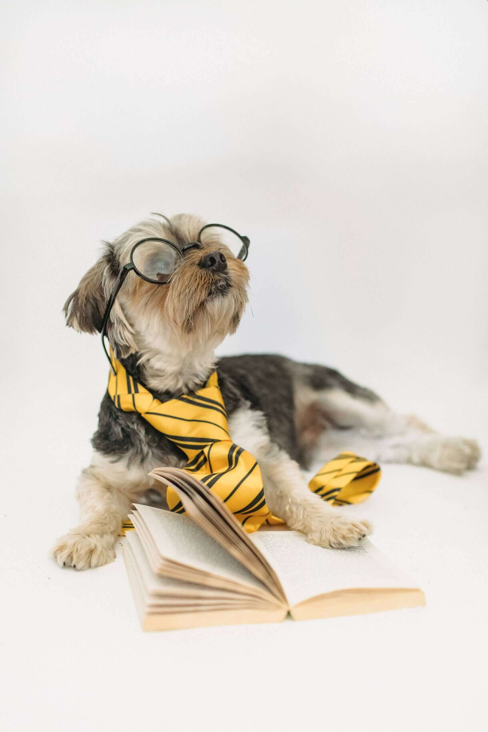 Dog reading a book for blog by GrowTraffic on how to get readers to your blog