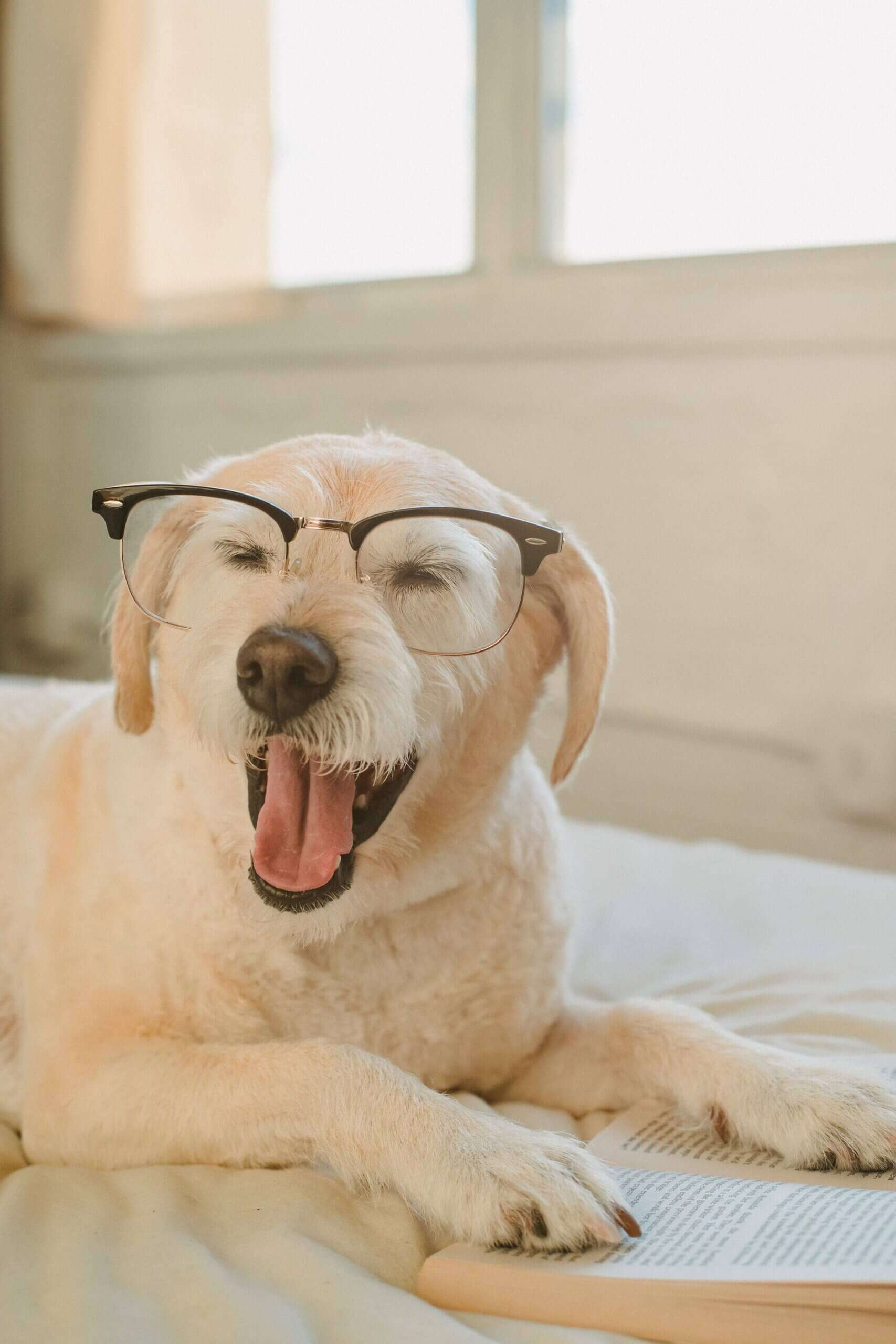 dog wearing glasses for blog by GrowTraffic on how to get readers to your blog