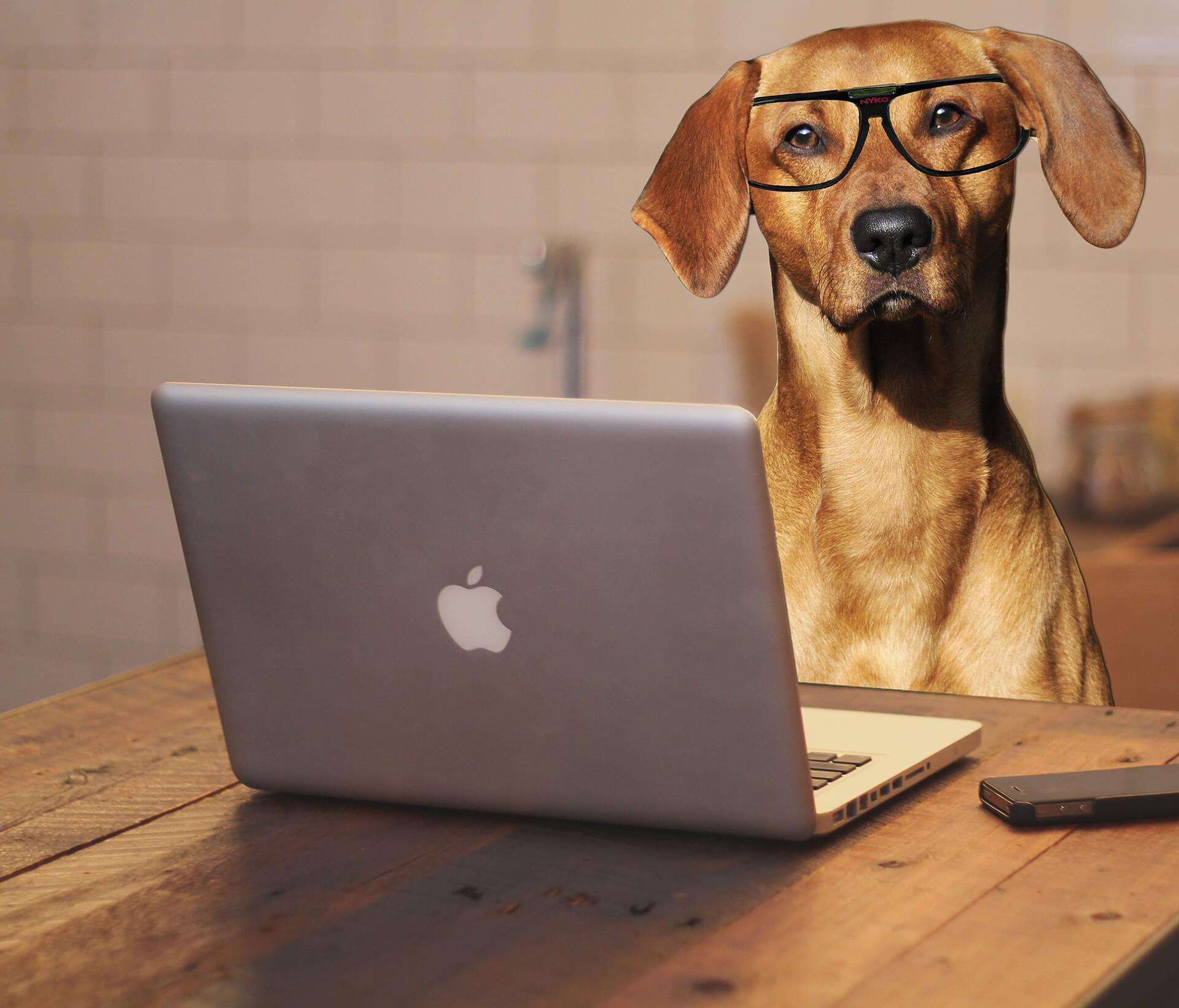 dog using one of three types of searches