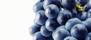 image of some black grapes, representing organic growth